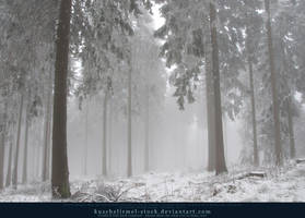 Winter Forest with Fog 10 by kuschelirmel-stock