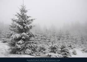 Winter Forest with Fog 09 by kuschelirmel-stock