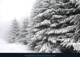 Winter Forest with Fog 08 by kuschelirmel-stock