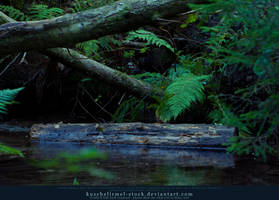 Magic Forest 01 by kuschelirmel-stock