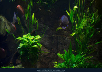 Underwater Plants 02 by kuschelirmel-stock