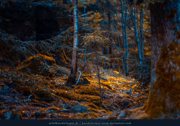Fall Colours Preview by kuschelirmel-stock