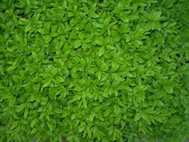 texture leaves by kuschelirmel-stock
