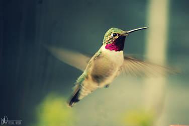 Hummingbird by RainKira