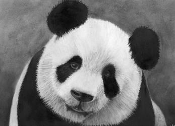 panda by rainbow-falls