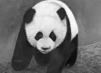 panda 2 by rainbow-falls