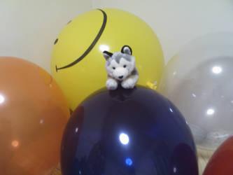 Husky plushie and balloons by hirohusky