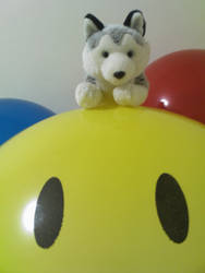 Husky's giant smiley balloon by hirohusky