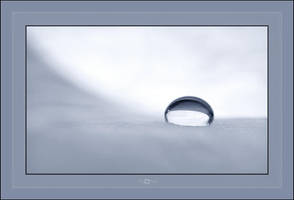 Snowdrop by mental