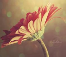 .:Simplicity:. by LT-Arts