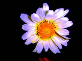 Daisy by mcb011789