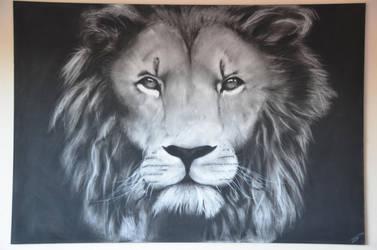 Lion by megprs