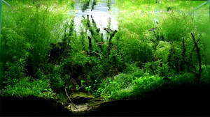 Aquascape 2007:  Bamboo Forest by StevenChong-no-GMF