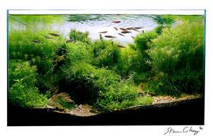 Bamboo Forest: natsu no yama by StevenChong-no-GMF