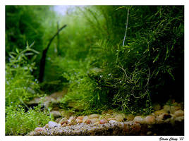 Forest Trail by StevenChong-no-GMF