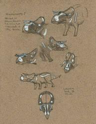 Nasutoceratops sketches by Kutchicetus-Minimus