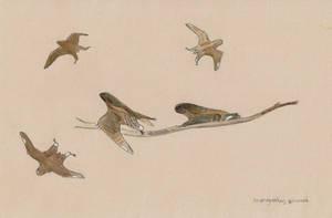 Anurognathus sketches by Kutchicetus-Minimus