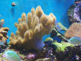 Coral Reef 10 by gwenna-stock