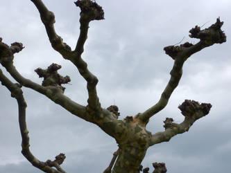 tree III by Titelgestalten