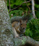 Squirrel Closeup by ecfield