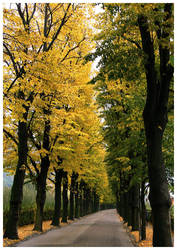 Autumn Avenue by saftsaak