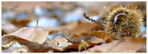 Autumn Fruits by saftsaak