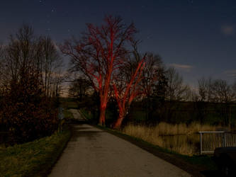 Red Trees during full moon by ThePraiodanish