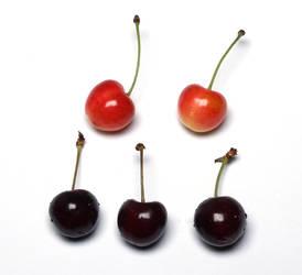 Cherries by ThePraiodanish