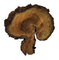Tree Dualism by ThePraiodanish
