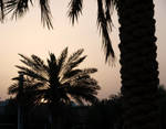 Palm by ThePraiodanish