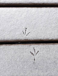 Little Feet by ThePraiodanish