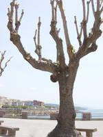 Trees by ThePraiodanish