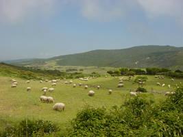 Sheepworld by ThePraiodanish