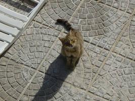 Meow by ThePraiodanish