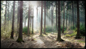Forrest 4 by yobac