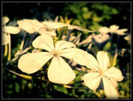 flower life by LeyBorealis