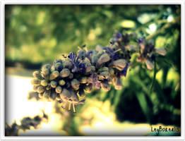 leyla by LeyBorealis