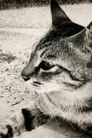 I am a serious cat by vonvonz