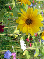 Wildflowers II by Freckles4815162342