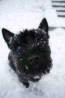 Vips in Winter by Ciuva