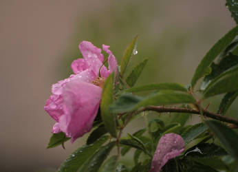 Raindrops by Ciuva