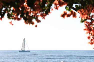 sailing fleur  by SquishyKurage