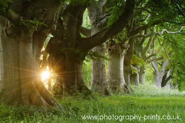 Through the Beech Trees by Neutron2K