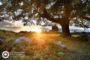 On the Horizon by Neutron2K