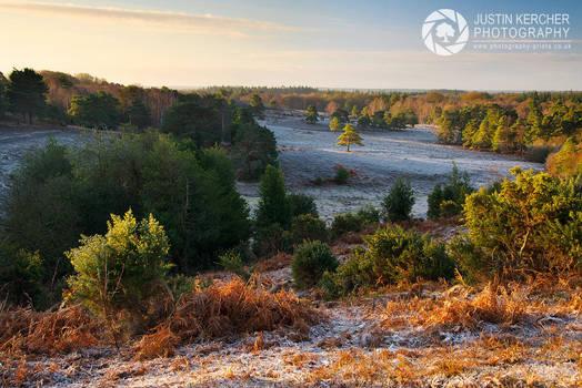 Golden Morning over Acres Down by Neutron2K