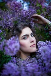 Lilacs by Nivelis