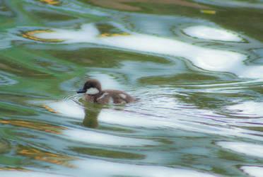Swimming Along by Jeckina