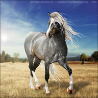 Kygo by VIP-EquineArt