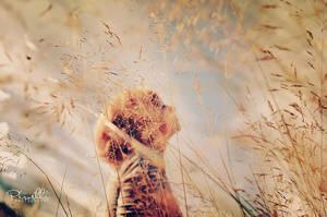 Chronichles of a dying summer by Piroshki-Photography