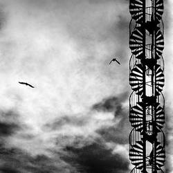 Abstract flight by Vlad-Off-kru
